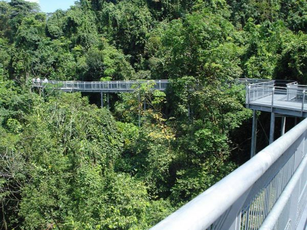 Singapore Things To Do Outdoors - Elevated Walkway Forest Walk